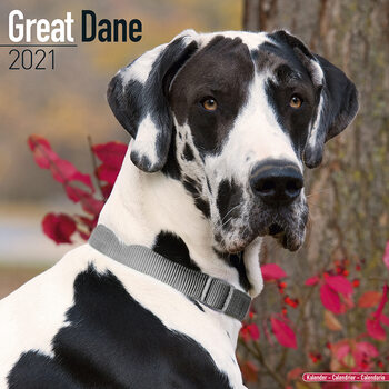 Great Dane Kalendarz 2021