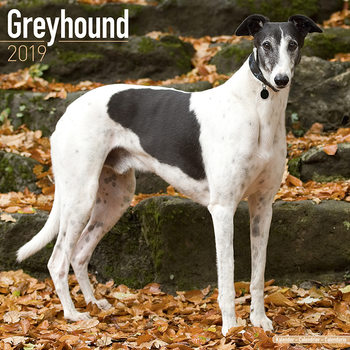Greyhound Kalendarz 2019