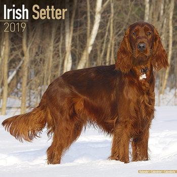 Irish Setter Kalendarz 2019