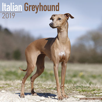 Italian Greyhound Kalendarz 2019