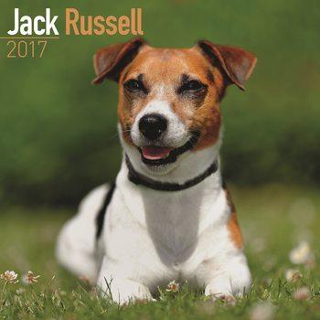 Jack Russell Terriers Kalendarz 2017