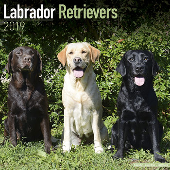Labrador Ret (Mixed) Kalendarz 2019