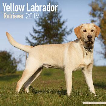 Labrador Ret (Yellow) Kalendarz 2019