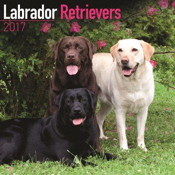 Labrador Retriever Kalendarz 2017