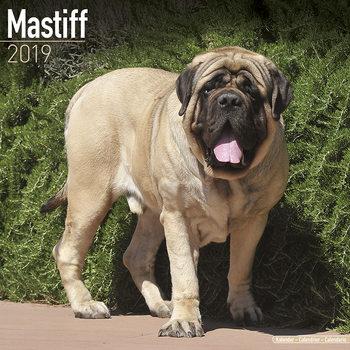 Mastiff Kalendarz 2019
