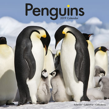Penguins Kalendarz 2019