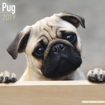 Pug Kalendarz 2019