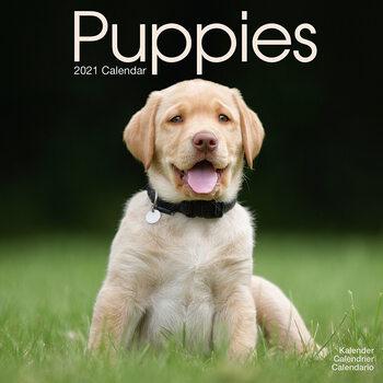 Puppies Kalendarz 2021