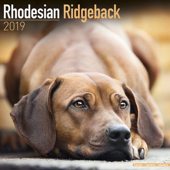 Rhodesian Ridgeback Kalendarz 2019