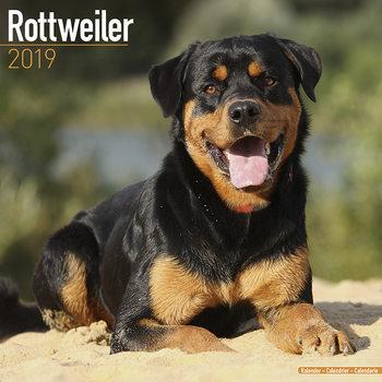 Rottweiler Kalendarz 2019