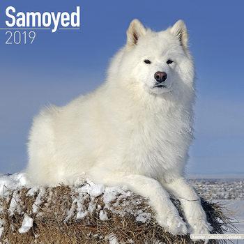 Samoyed Kalendarz 2019