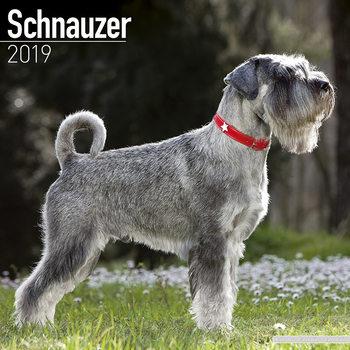 Schnauzer Kalendarz 2019