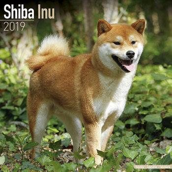 Shiba Inu Kalendarz 2019