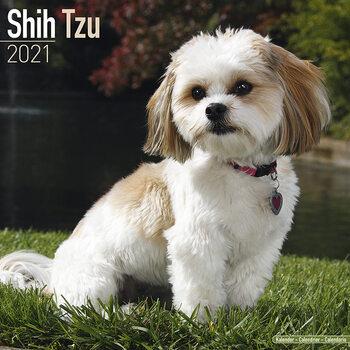 Shih Tzu Kalendarz 2021