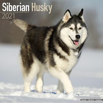 Siberian Husky Kalendarz 2021
