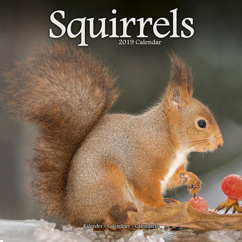 Squirrels Kalendarz 2019