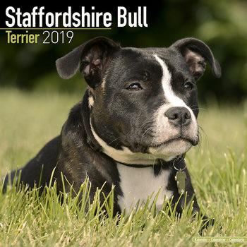Staffordshire Bull Terrier Kalendarz 2019