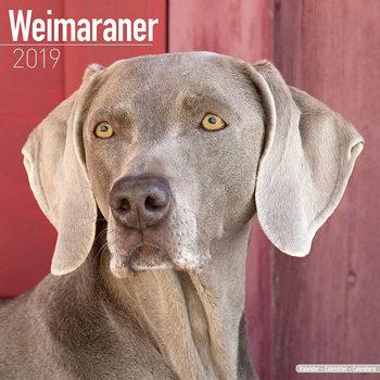 Weimaraner Kalendarz 2019