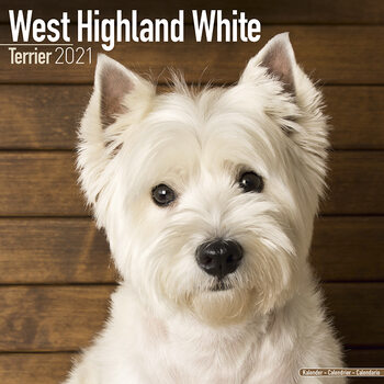 West Highland Terrier Kalendarz 2021