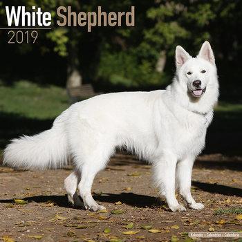 White Shepherd Kalendarz 2019
