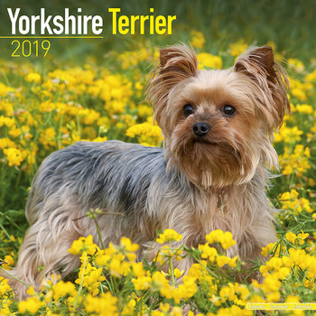Yorkshire Terrier Kalendarz 2019