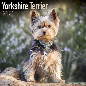Yorkshire Terrier Kalendarz 2021