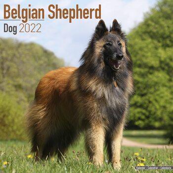 Belgian Shepherd Dog Kalendarz 2022