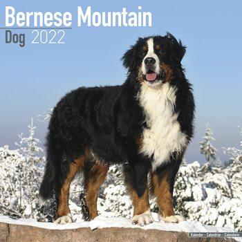 Bernese Mountain Dog Kalendarz 2022