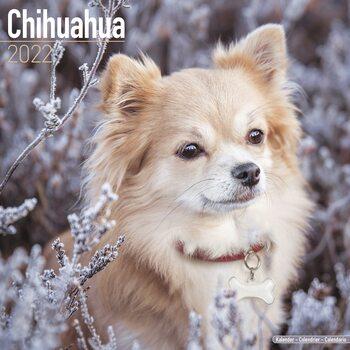 Chihuahua Kalendarz 2022