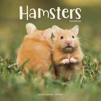 Hamsters Kalendarz 2022