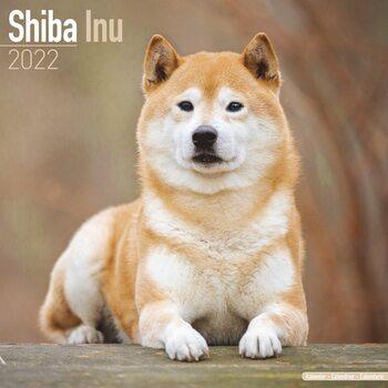 Shiba Inu Kalendarz 2022