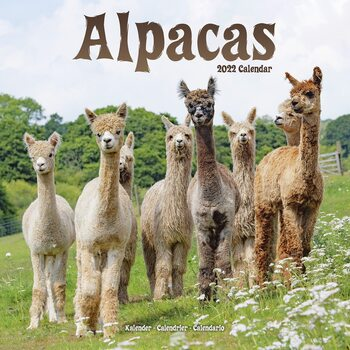 Kalender 2022 Alpacas