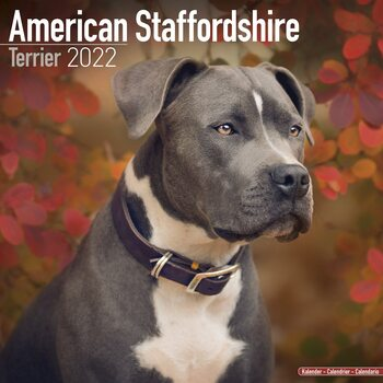 Kalender 2022 American Staffordshire Terrier