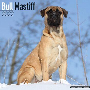Kalender 2022 Bull Mastiff