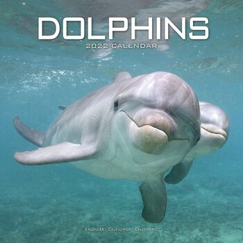 Kalender 2022 Dolphins