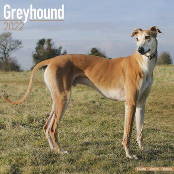 Kalender 2022 Greyhound