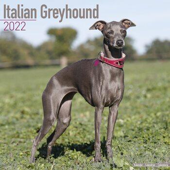 Kalender 2022 Italian Greyhound