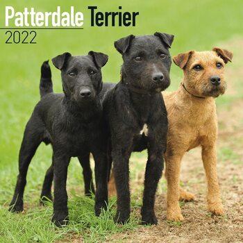 Kalender 2022 Patterdale Terrier