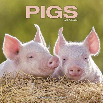 Kalender 2022 Pigs