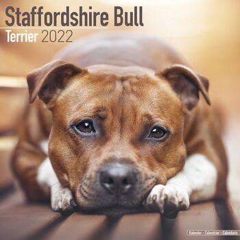 Kalender 2022 Staffordshire Bull Terrier