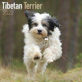 Kalender 2022 Tibetan Terrier