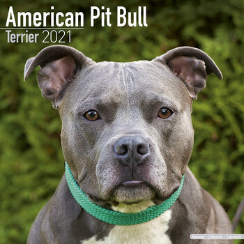 Kalender 2021 American Pit Bull Terrier