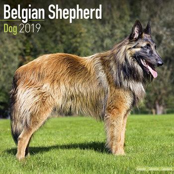 Kalender 2019  Belgian Shepherd Dog
