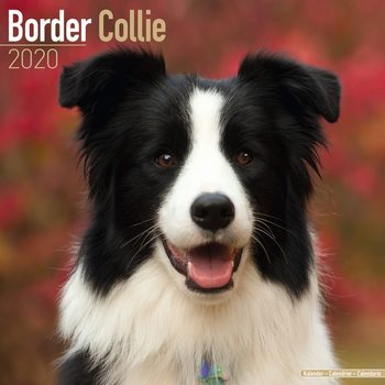 Kalender 2020-  Border Collie