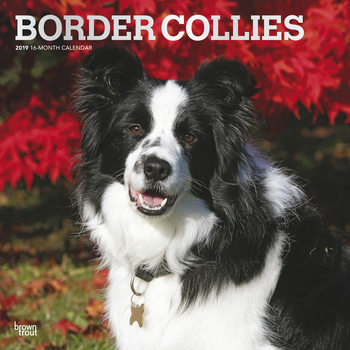 Border Collies Kalender 2019