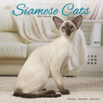 Cats - Siamese Kalender 2018