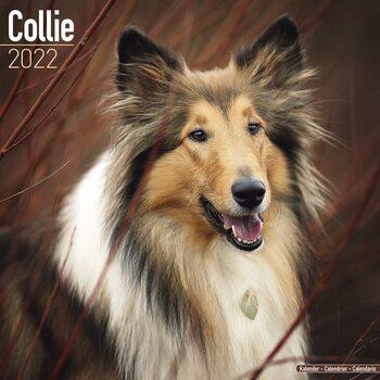 Kalender 2022 Collie