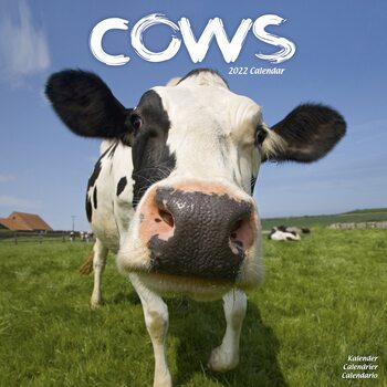 Kalender 2022 Cows