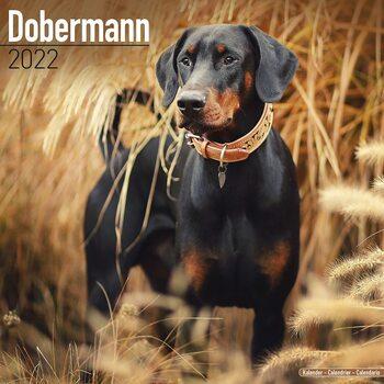 Kalender 2022 Dobermann