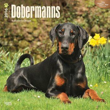 Kalender 2021 Dobermann